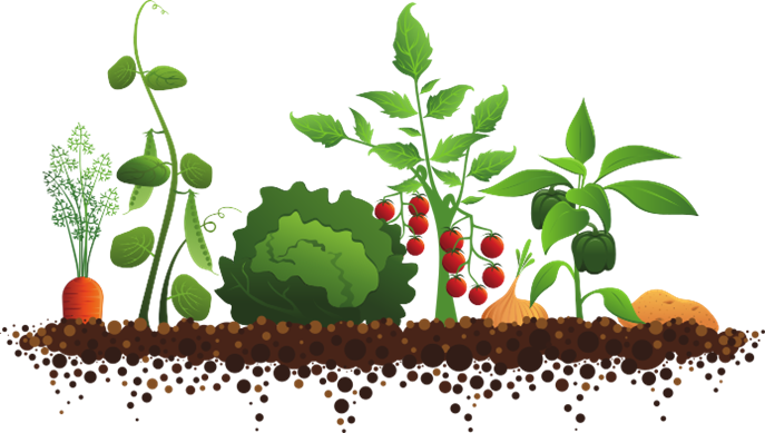 High Quality If You Are In Grades 1 U0026 Up And Enjoy Gardening, Or Want To Learn How To  Grow Your Own Veggies, Sign Up For Our Gardening Club Go Go Garden.