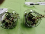 Craft Night - Stylish Succulents 3.20.19