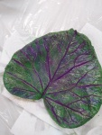 leaf casting 6.20.19